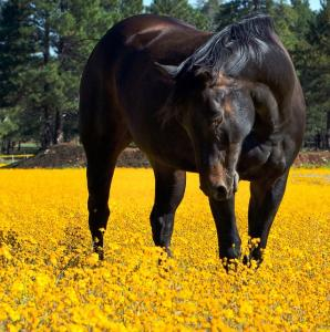A guide to poisonous plants for horses and ponies