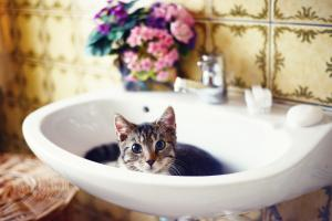 Do cats need bathing?