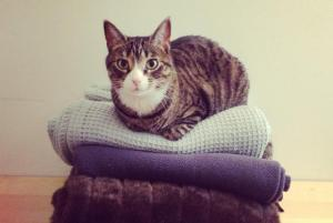 The Indoor/Outdoor Cat Debate