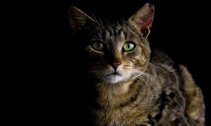 Should cats be kept inside at night?