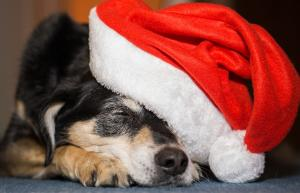 Helping your dog cope with Christmas