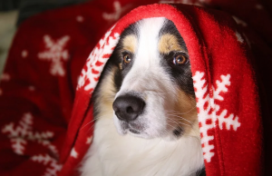 Helping your pets cope with Christmas