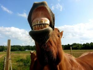 Looking after your horse's teeth