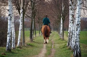 Top 10 UK Bridleways