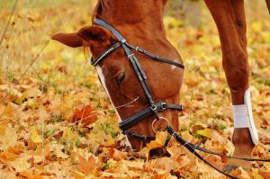 Autumn horse care tips