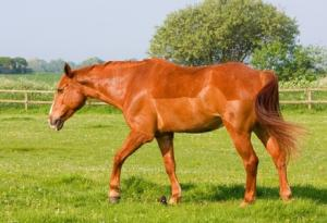 How to correctly body condition score your horse