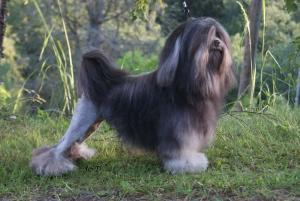 Breed Focus: The Lowchen