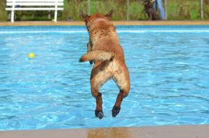 How swimming can benefit your dog