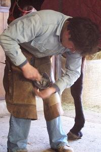 Helping our farriers help us