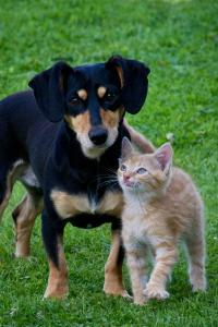 How to introduce your dog to other pets: Part 1, cats