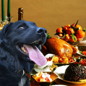 Foods to avoid feeding your pets this Christmas