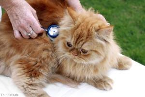 Why register your cat with a vet?