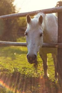 Buying your first horse - are you ready?