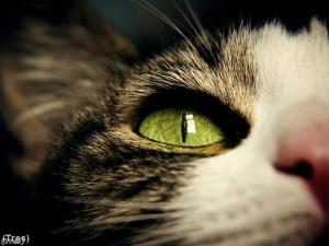 Take care of your cat's skin and eyes