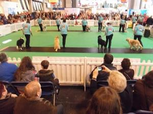 A day at Crufts 2014