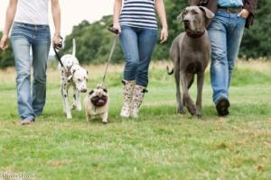 Great North Dog Walk celebrates its 25th anniversary
