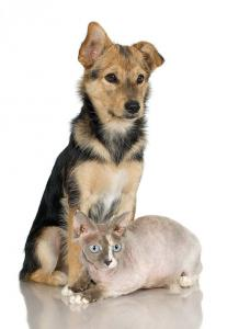 Dogs more likely to be insured than cats