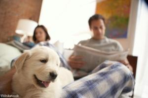 Bonding hormone linked to spending time with dogs