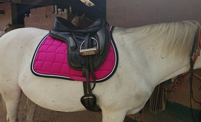 Image for review Love this saddle pad brought it for the colour