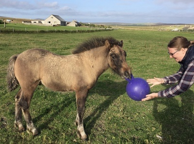 Image for review Brilliant pony toy!