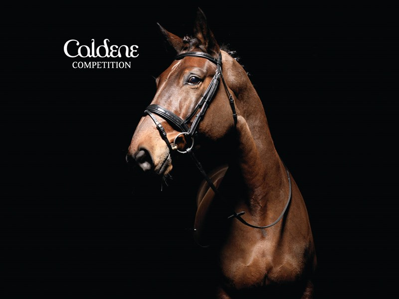 Caldene Croc Flash Snaffle Bridle