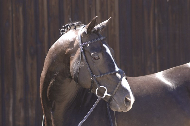 Caldene Grackle Bridle with Rubber Reins