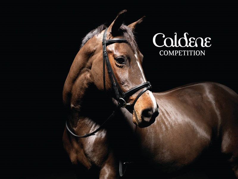 Caldene Padded Flash Snaffle Bridle