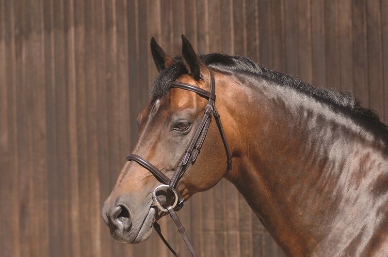 Caldene Plain Raised Snaffle with Reins