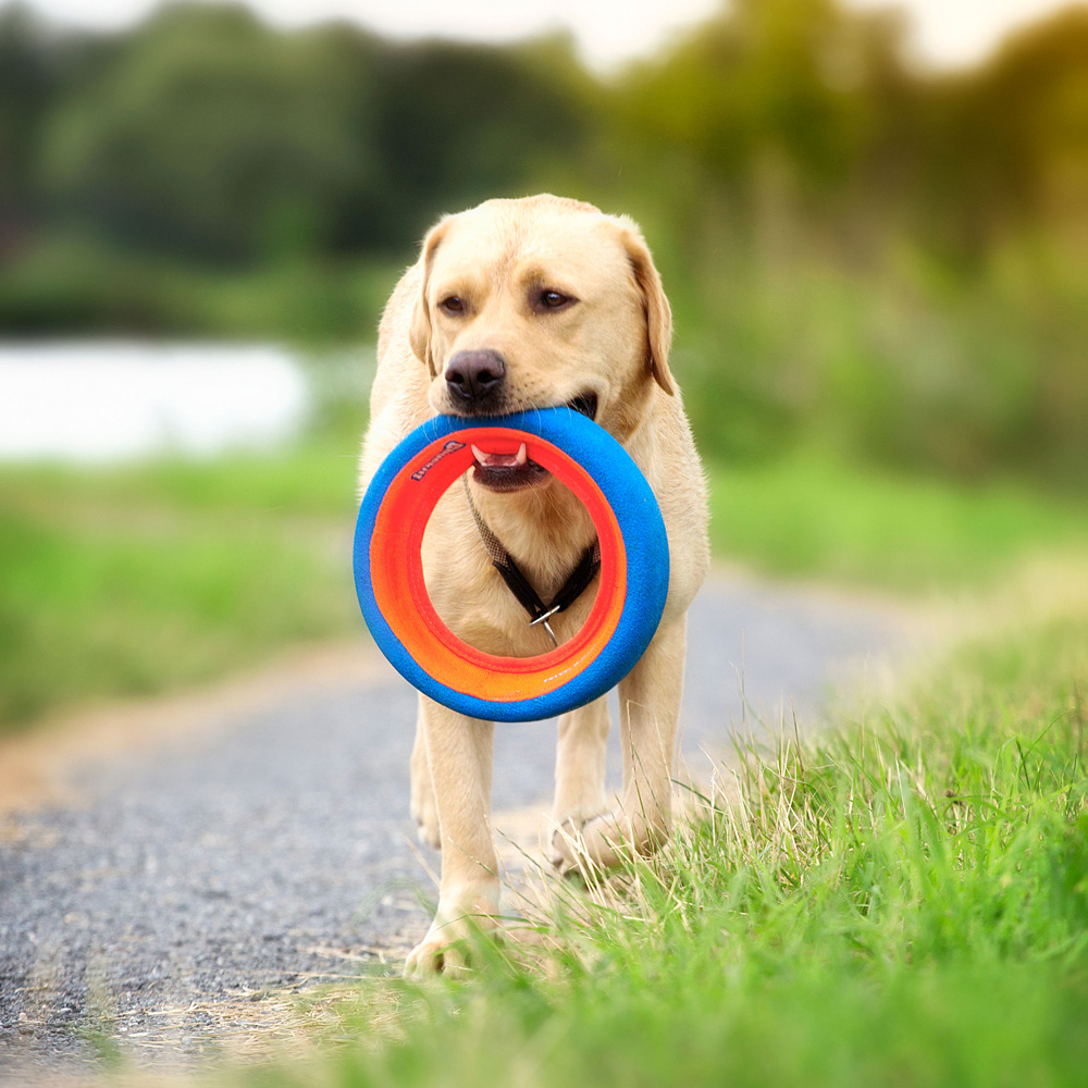 Chuckit Fetch Wheel Dog Toy