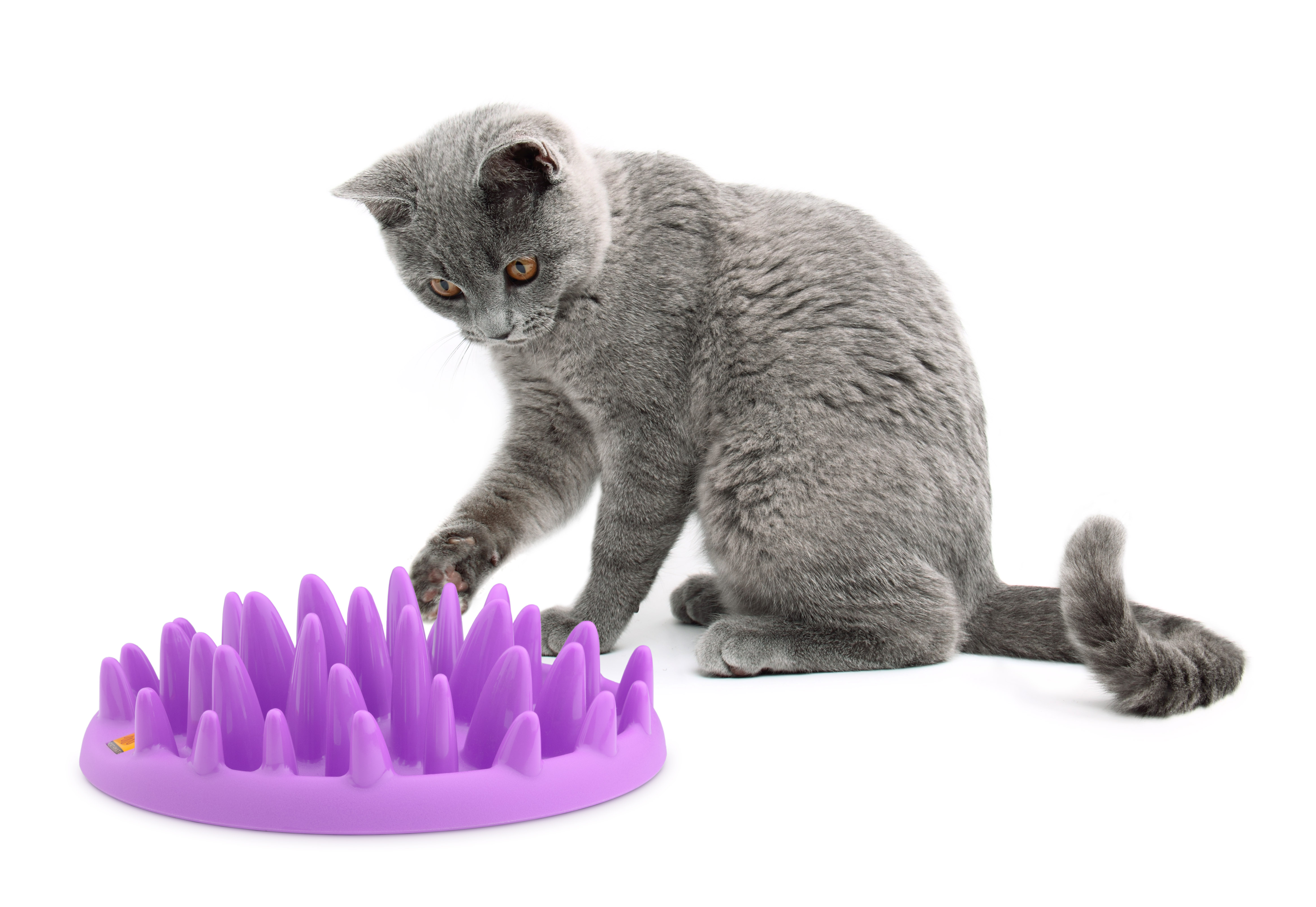 Company Of Animals Catch Interactive Slow 🐱 Cat Feeder