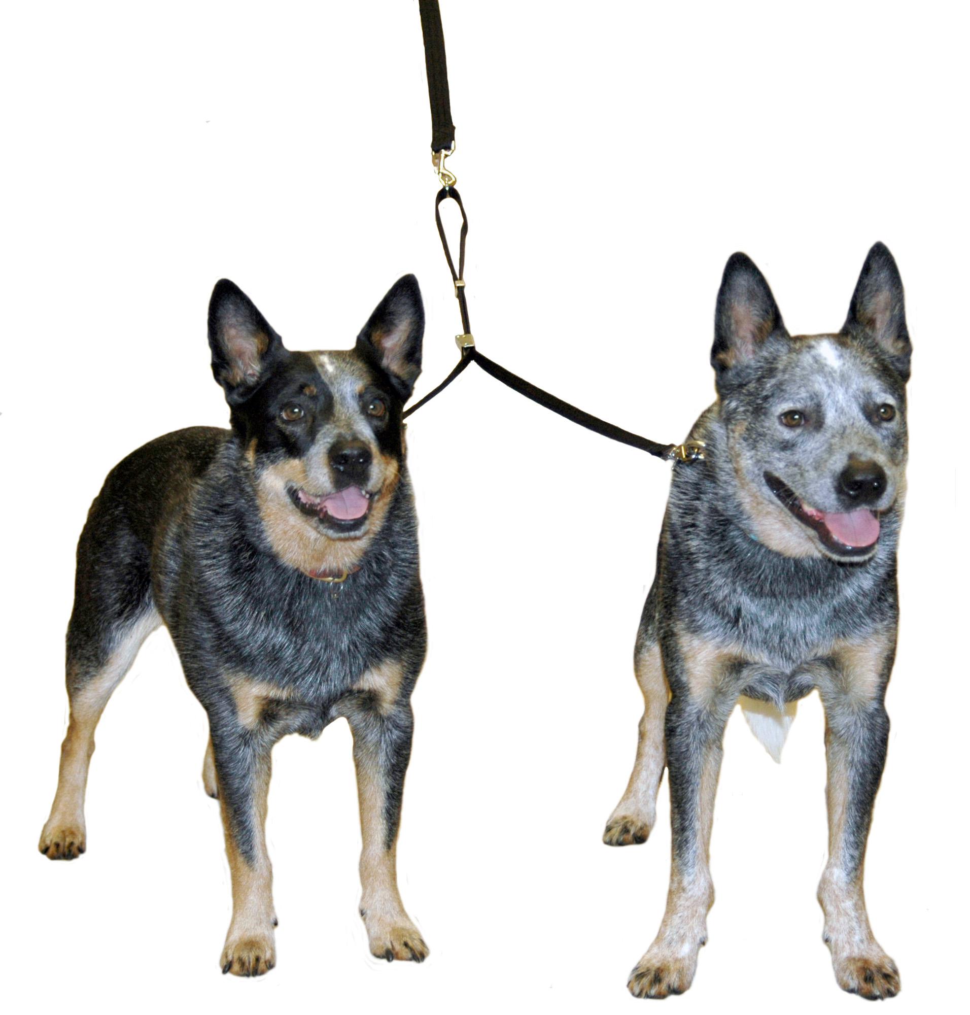 Dog Coupler Uk