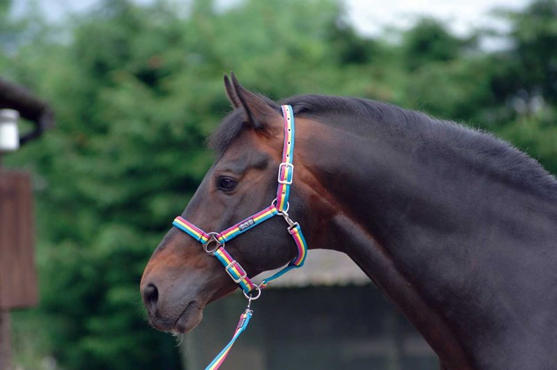 Cottage Craft Comfy Web Headcollar