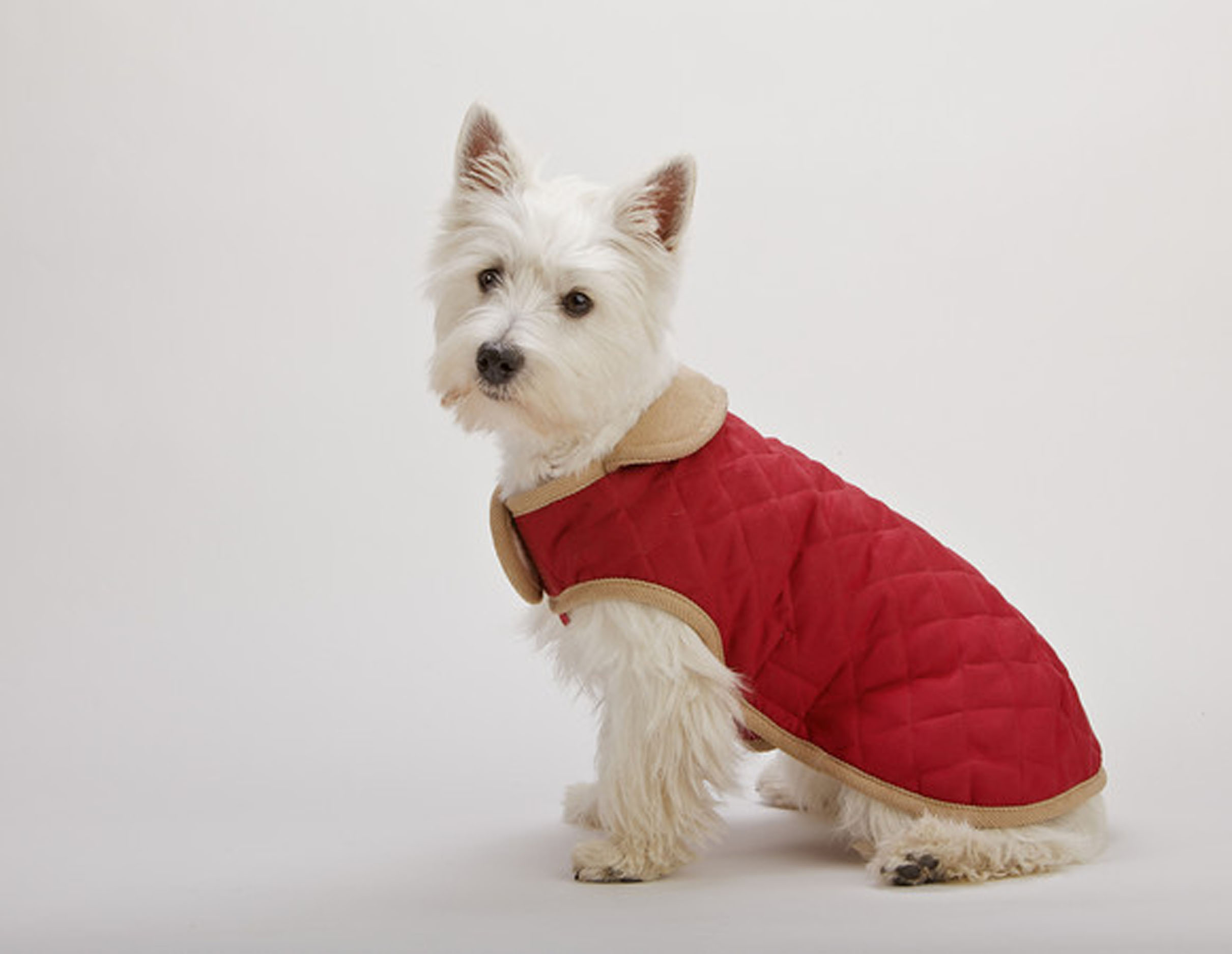 Dog Gone Smart Suede Quilted Belly Coat Red