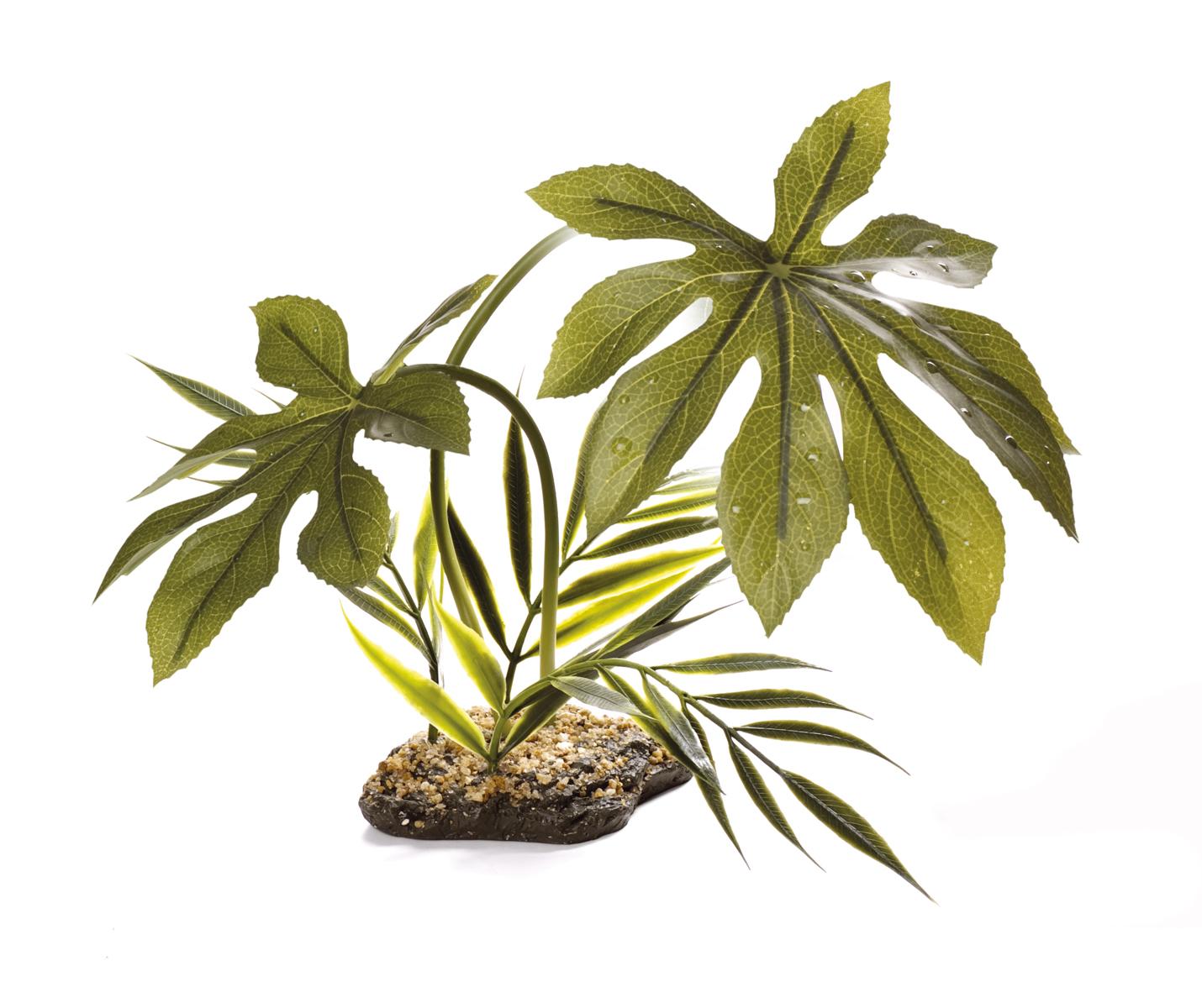 Komodo Canopy Vivarium Plants