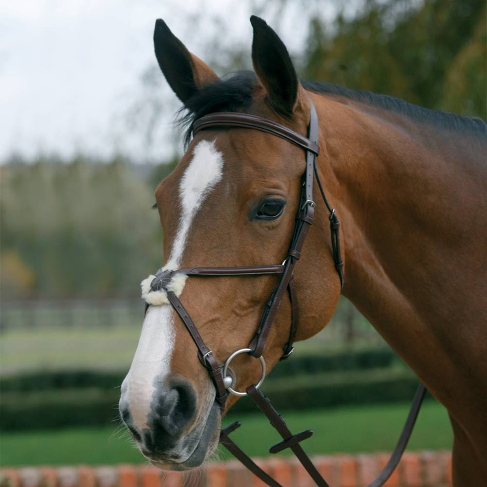 Mark Todd Plain Raised Bridle With Grackle Noseband