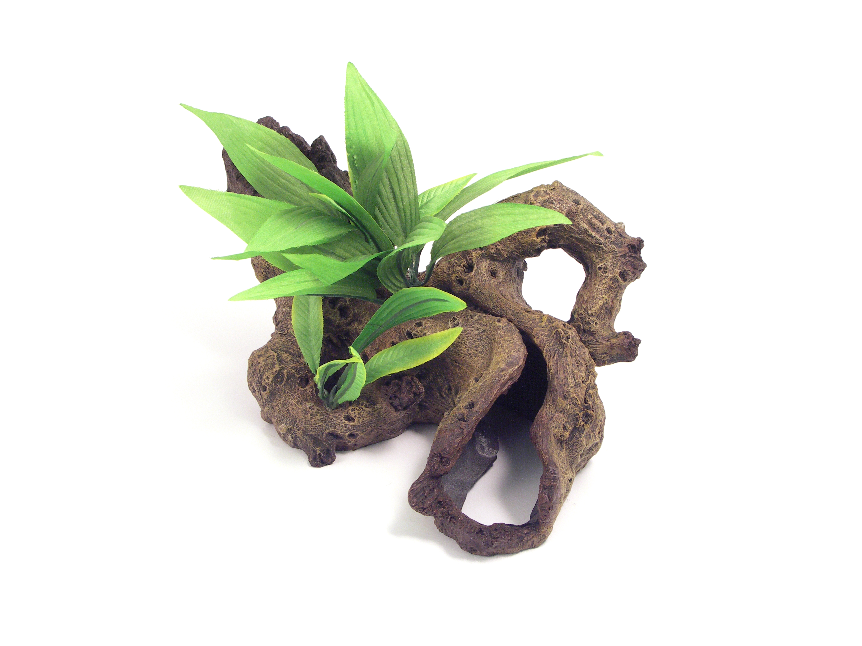 Rosewood Blue Ribbon Mopani Wood With Plants