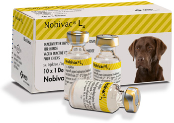Nobivac Lepto Injection for Dogs