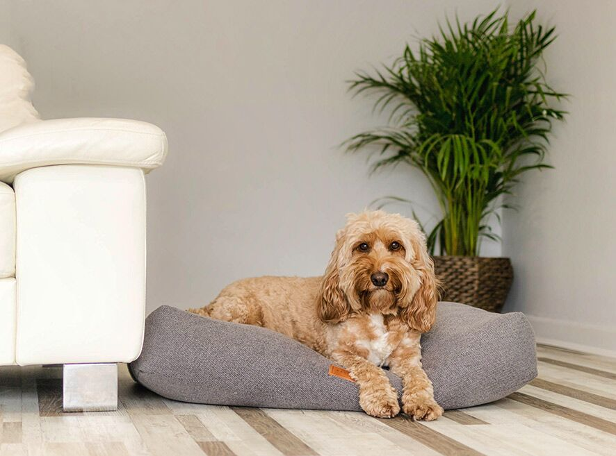 Ralph & Co Windsor Collection Dog Beds