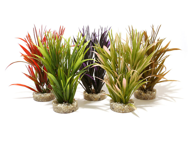 Sydeco Natural Plants Tropical Grass Aquarium Plant