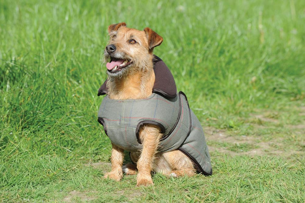 WeatherBeeta Tweed 🐶 Dog Coat