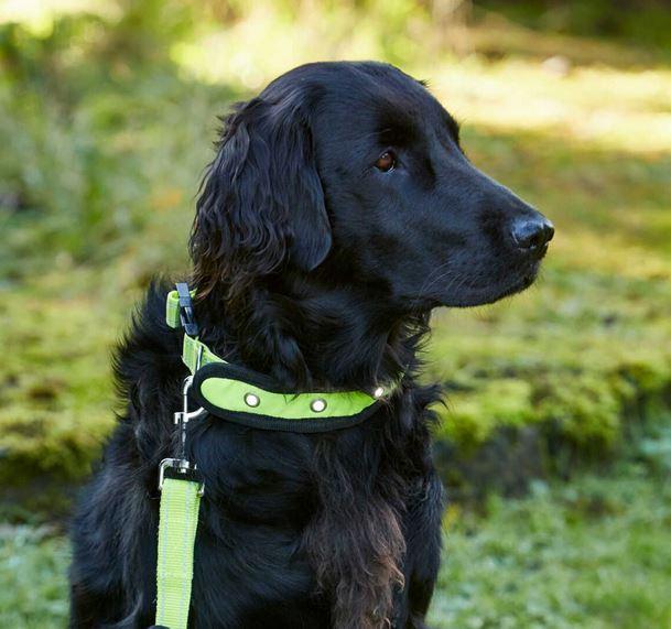 Flashing Dog Collar Wholesale Uk