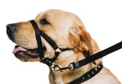 Ancol Training Halter for Dogs