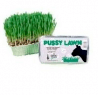 Catac Pussy Lawn Instant Grass
