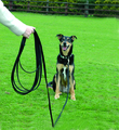 CLIX Long Recall Line Black Dog Lead