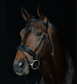 Collegiate Padded Shaped Raised Noseband Flash Bridle