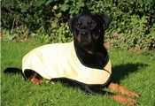 Prestige Pet Products Dog Cooling Coat