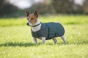 Digby & Fox Quilted Dog Coat Dkgrn
