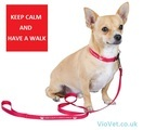Keep Calm and Have a Walk Nylon Dog Lead