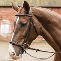 Mark Todd Noseband German Drop