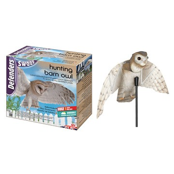 Defenders Hunting Barn Owl